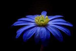Granaowa marynarka dla Zim powinna mieć intensywność tego kwiatu